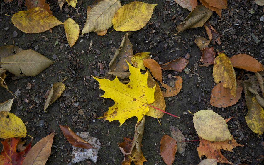 liście-jesień-ulica